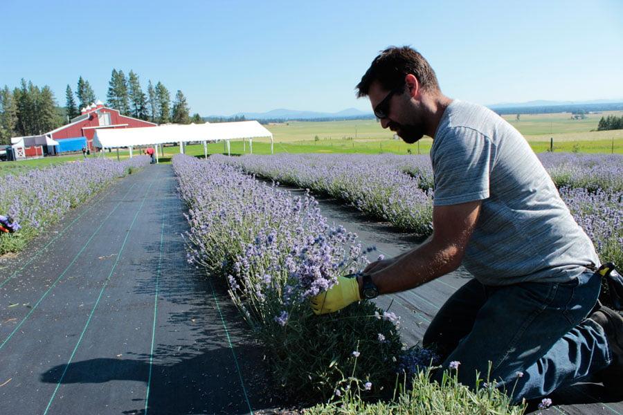 Worker Harvesting