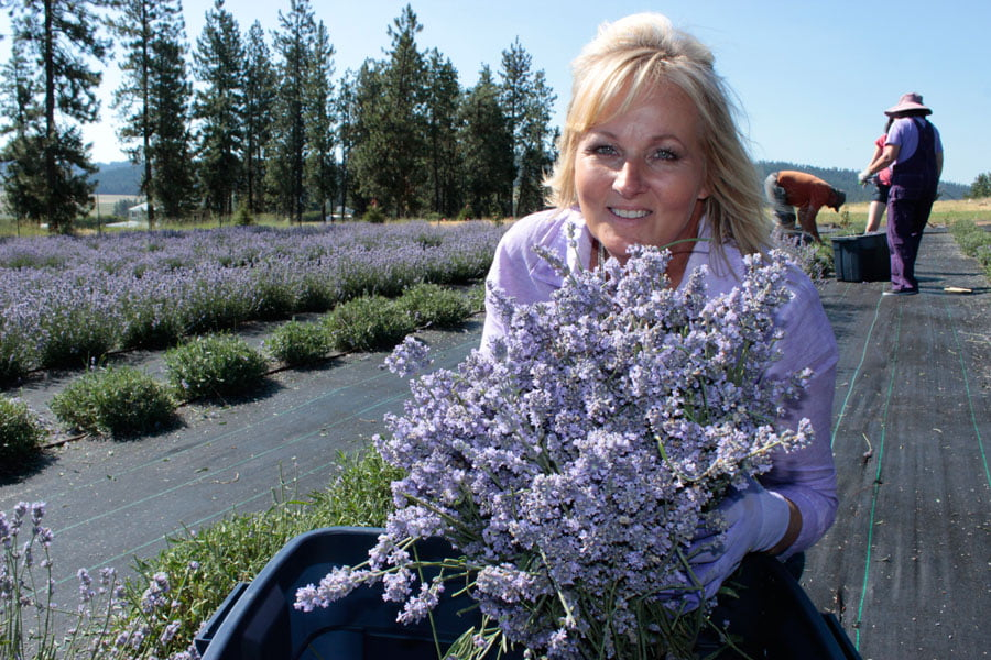 Owner, Sandra Shuff, With a Bundle of Freshly Cut Lavender