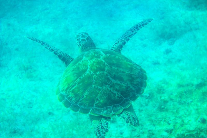 le spiagge piu belle del messico in riviera maya