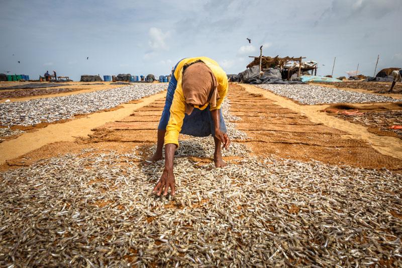 mercato pesce negombo sri lanka