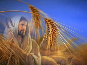 Gesù-spighe