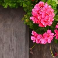 Coltivare le virtù ecologiche - Laudato si' (14)