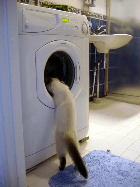 La curiosidad mató al gato... ¿Se moriría contento?