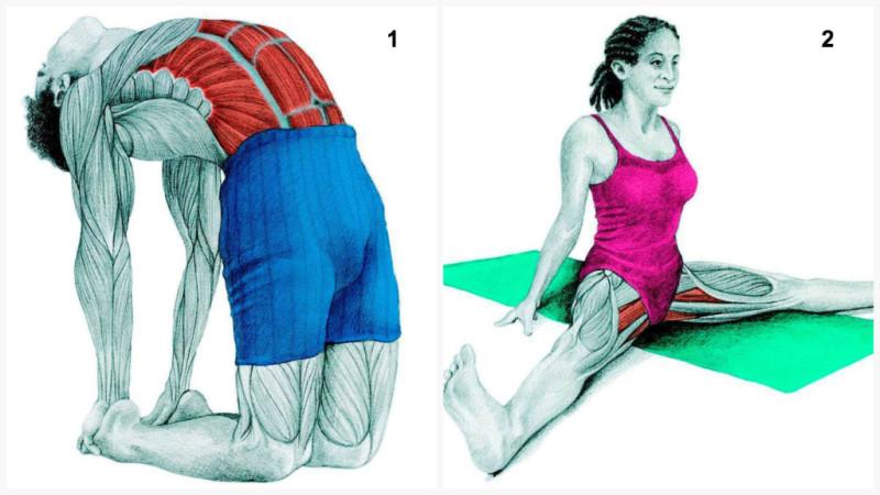 postura del camello estiramientos musculares