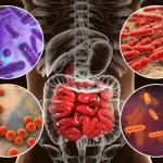 Mejorar la flora intestinal para bajar de peso y quitar la ansiedad