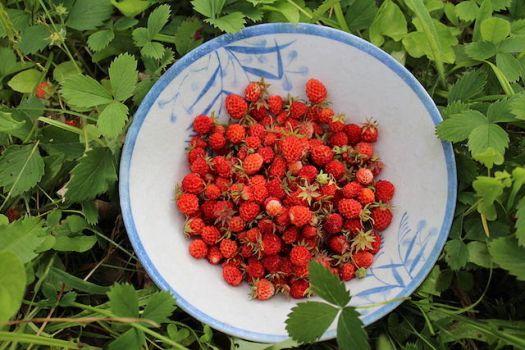 frutas y verduras fresa alpina