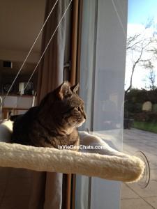 Comment Amnager Son Appartement Pour Deux Chats Heureux