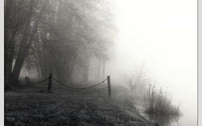 L'étang sous le brouillard