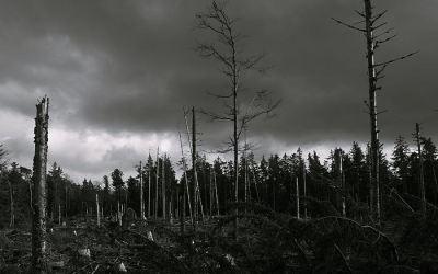 Tempête 1999 (Cicatrices)