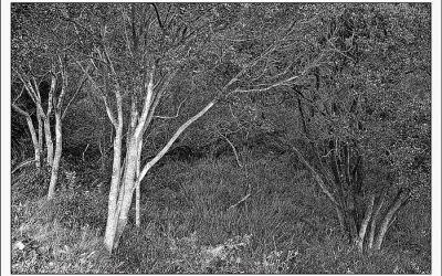 jeunes arbres