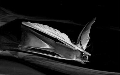 Je te donne ma plume…..