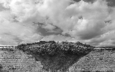 Un vieux mur