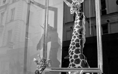 Les Girafes du Sentier