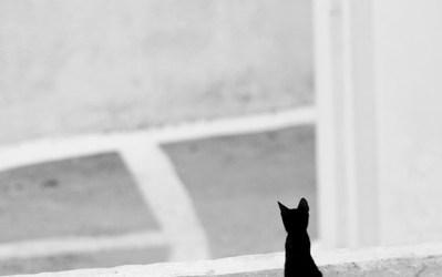 Histoires de Chats – 2