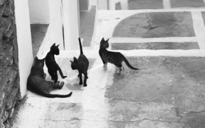 Histoires de Chats – 5