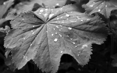 Feuille et pluie