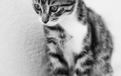 Histoires de Chats – 7