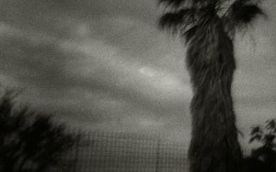 Le palmier ( Holga )