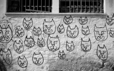 Cats power