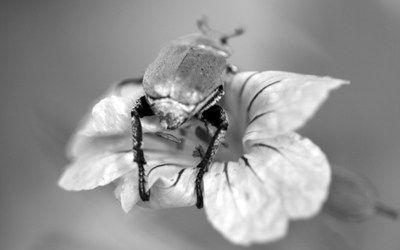 L'accroche-fleur