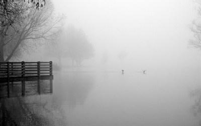 L'étang Chabaud-Latour 4