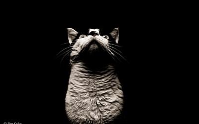 Josh the cat(h)