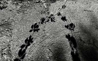 Les ombres dansantes