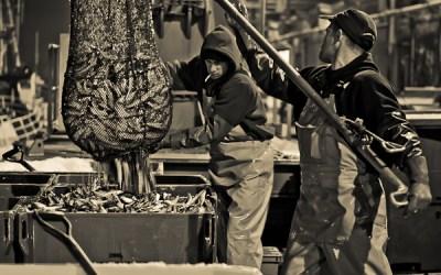 Les travailleurs de la mer débarquent leurs prises