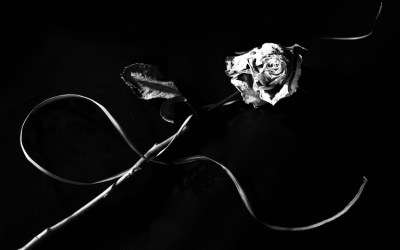 """L""a vie en rose"