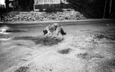 chien perdu…