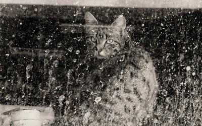 Le chat des Jacquets