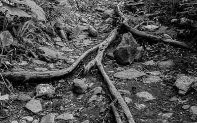 Les racines du chemin