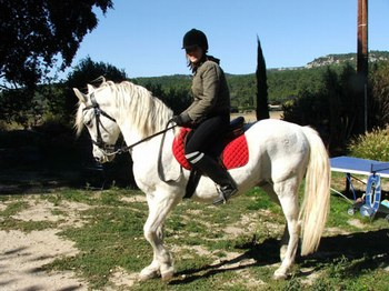 mon-cheval-harley