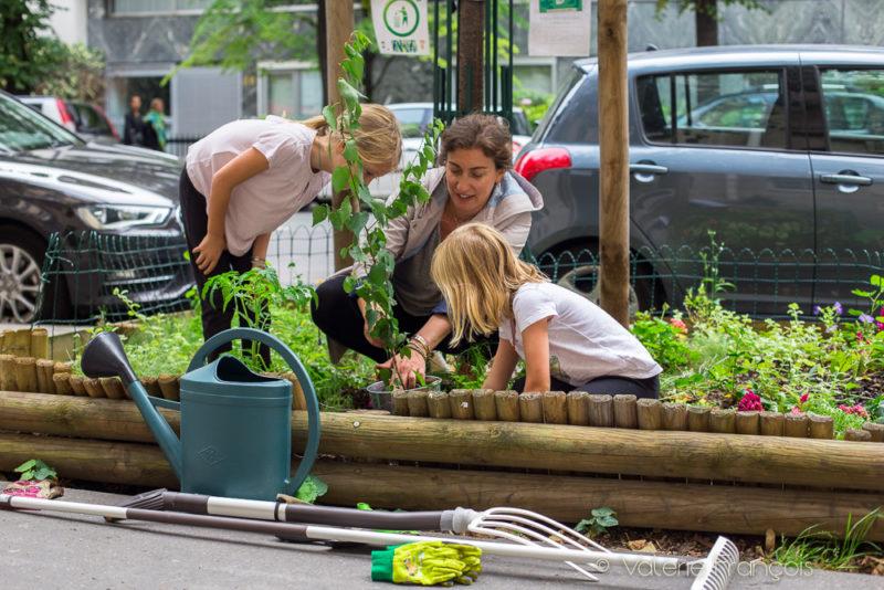 Végétaliser un pied d'arbre : le projet de Maureen