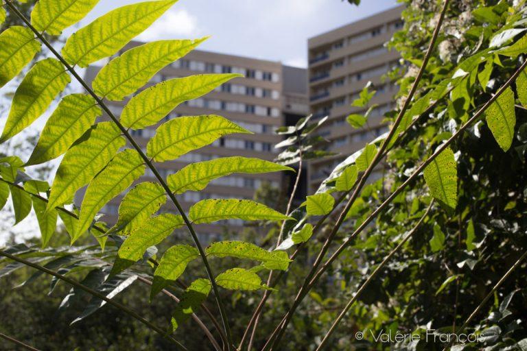 La nature en ville est source de bien être pendant le confinement