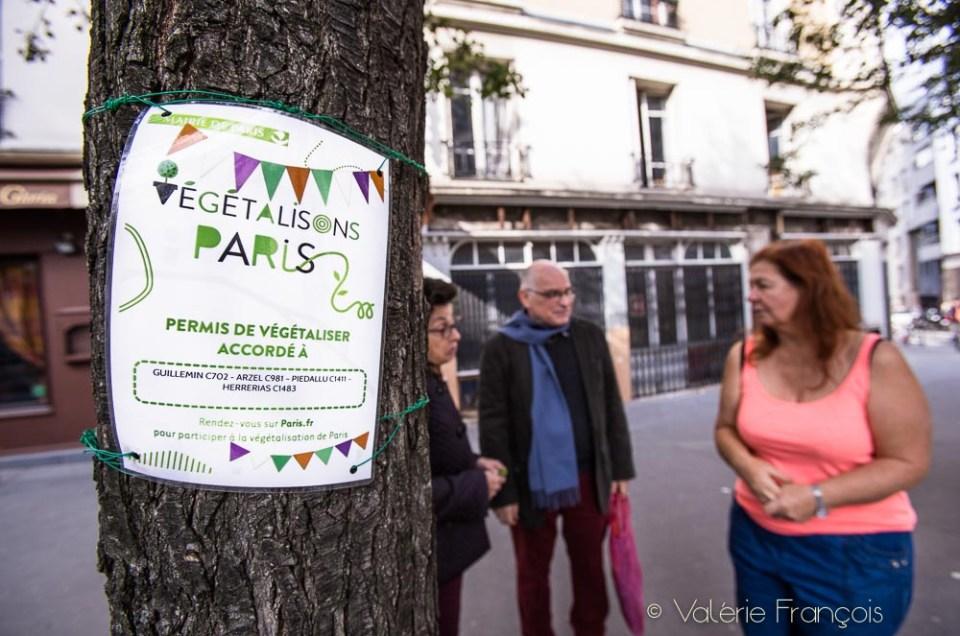 Permis de végétaliser à Paris : tout ce qu'il faut savoir