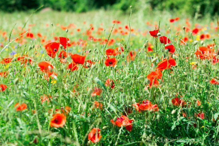 C'est une histoire d'amour entre les fleurs et les abeilles qui dure depuis l'éternité. On dit que les fleurs sont odorantes et colorées car elles veulent attirer les insectes sur elles et ainsi se reproduire. C'est pour cela que l'abeille est essentielle.