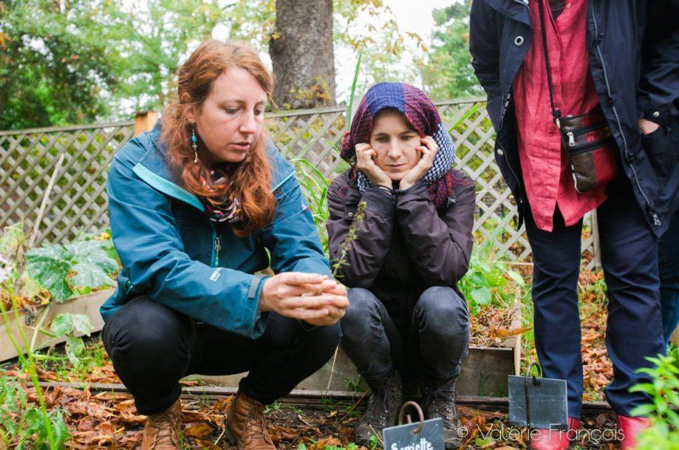 Herboristes et paysagistes  : les Cueilleuses de paysages redonnent vie aux plantes sauvages