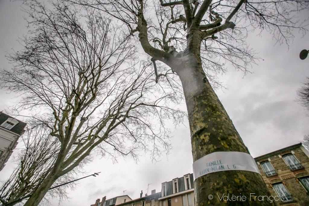 150 Chavillois ont adopté un arbre en protestation contre le projet d'abattage des arbres de la RD 910