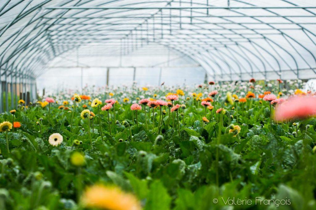 Il y a une demande de plus en plus grande sur la fleur locale et de saison.