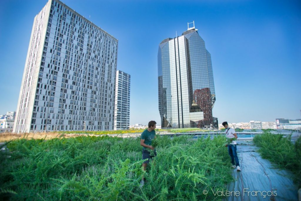 Maraîchage urbain, Wesh grow propose un véritable tour du monde de saveurs et d'odeurs