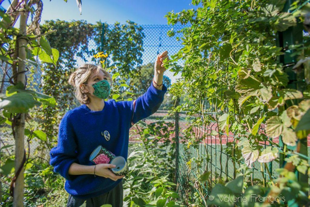 Au jardin du monde, cueillette du houblon - cité universitaire