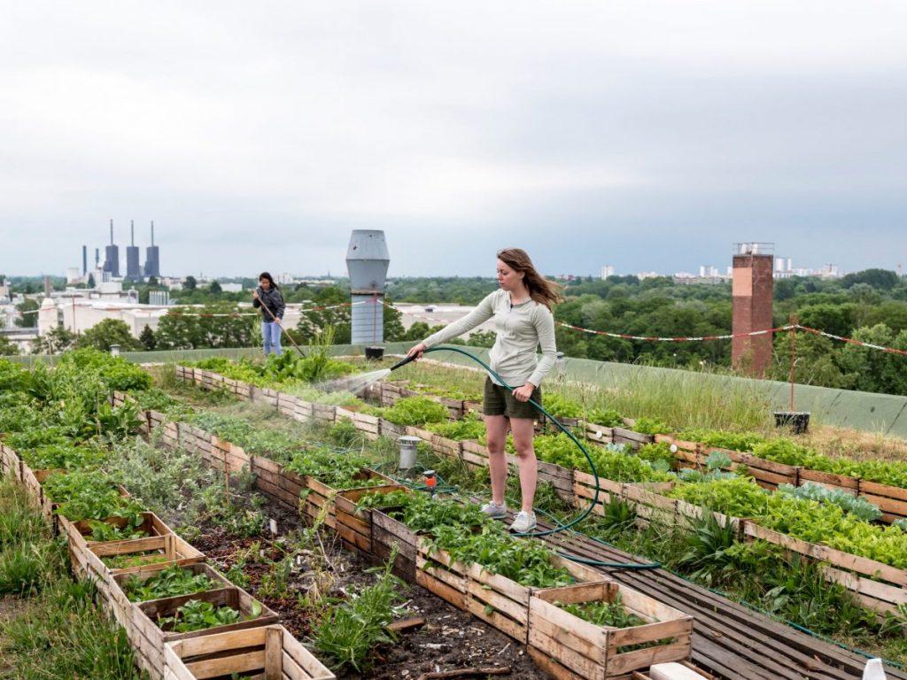 agriculture urbaine et nature en ville