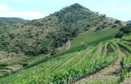 I vini del Priorato di Raül Bobet e Sergi Ferrer-Salat