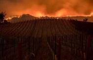 Viti e incendi: le conseguenze negative dei fumi sul vino