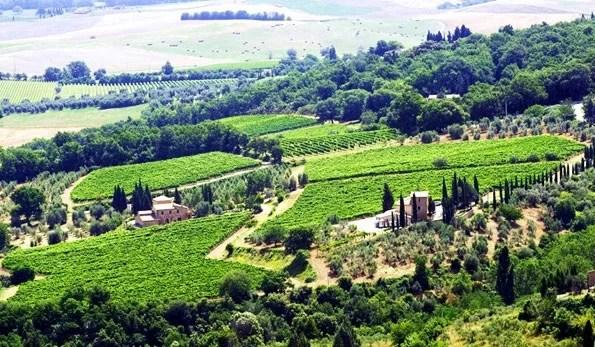 Azienda Vinicola Fuligni