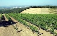 Sanlorenzo: là dove Montalcino vede il mare e intravede il futuro