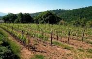 Montalcino: con i Salvioni rifiorisce la fantastica Cerbaiola