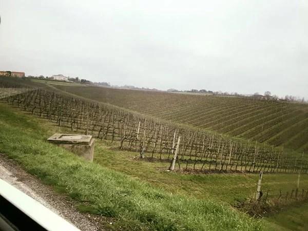 La collina e le vigne dell'azienda Umberto Cesari