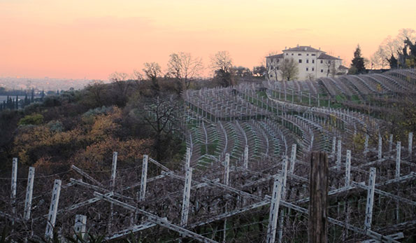 Anteprima Amarone 2015: breve viaggio nel tempo in 10 vini